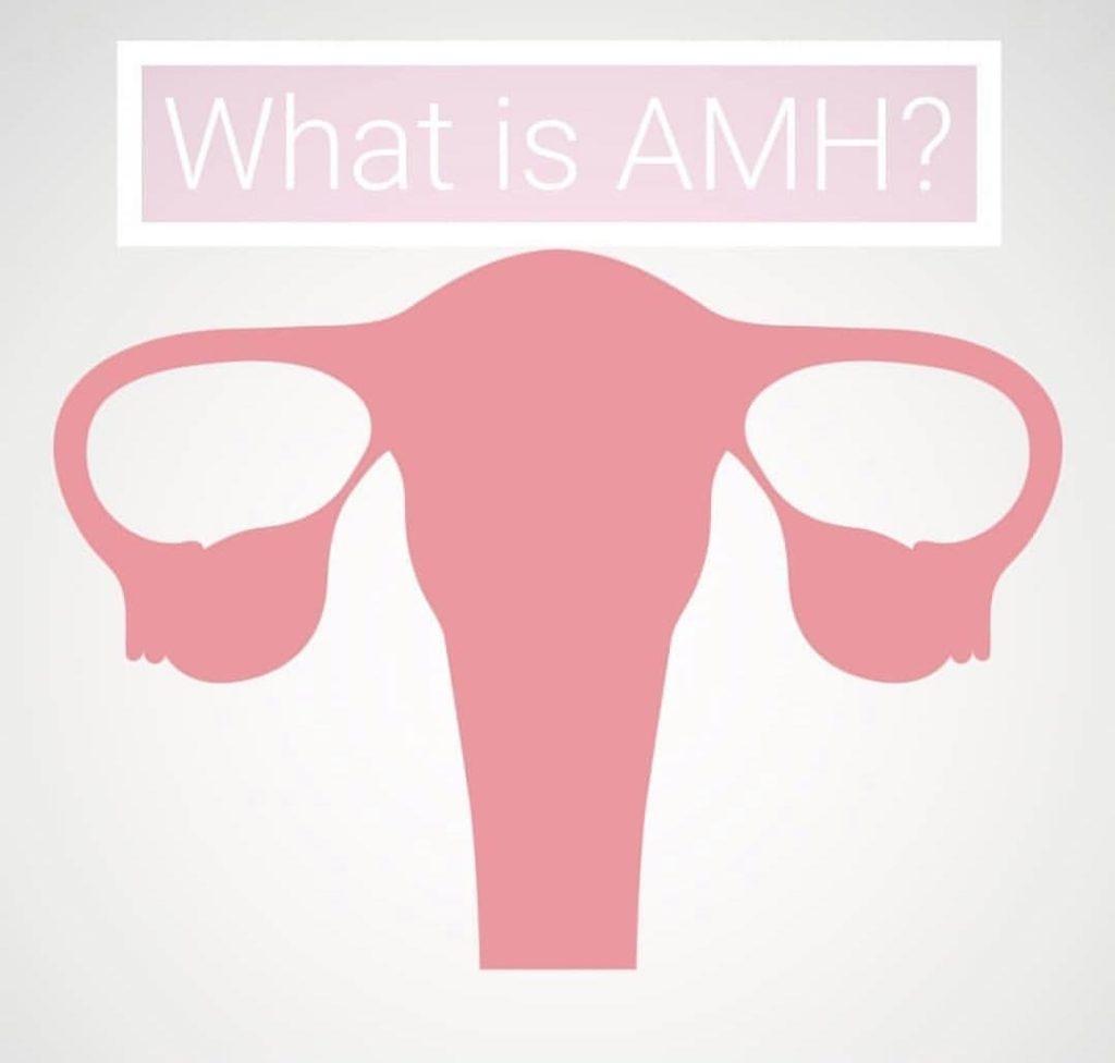 AMH(抗ミュラー管ホルモン、Anti-Mullerian Hormone)について